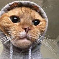Gato con capucha