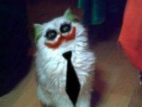 los gatunos perreadores :v